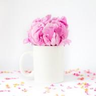 hc-styled-stock-photography-mug-shots-14-tw
